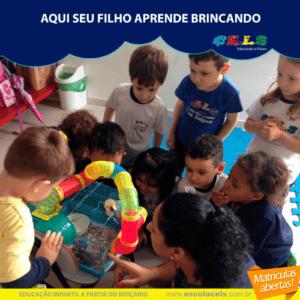Educação infantil palhoça 3 anos creche